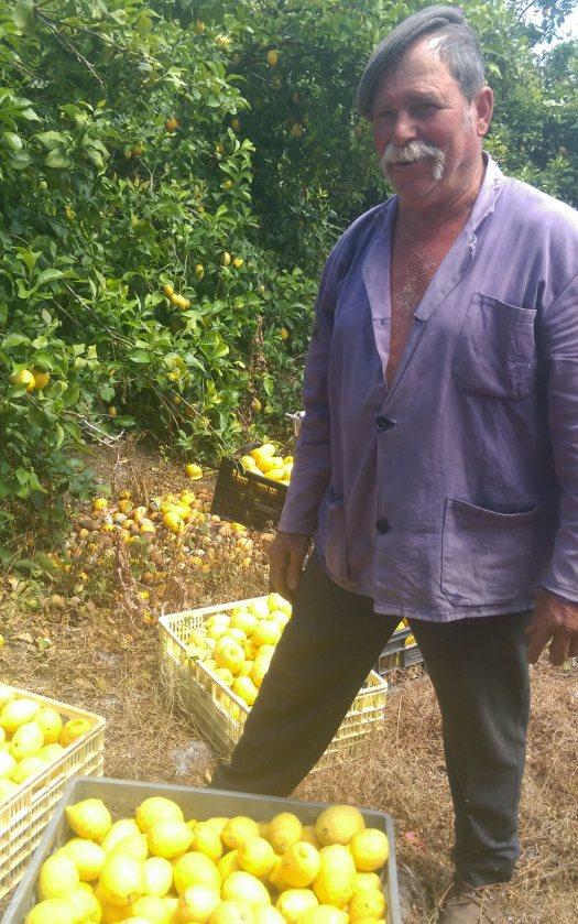 Man and his Lemons