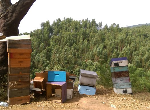 Bee Hives in Serra De Monchique